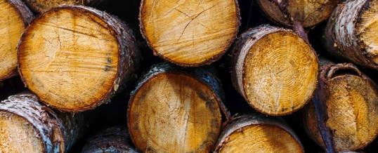 Australia's Illegal Logging Laws Review